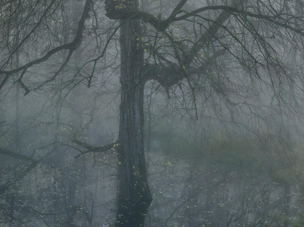 Michael Lange, Fluss #R2689, 2012 © Michael Lange 2014