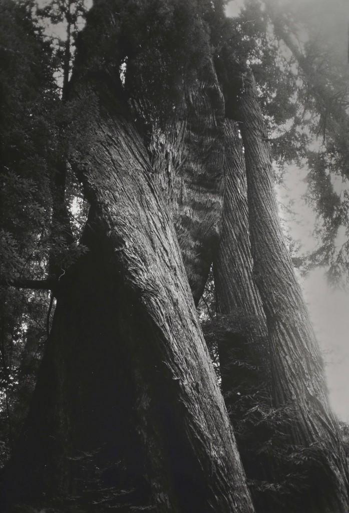 Dörte Eißfeldt; Redwood #1; 2014 © Dörte Eißfeldt