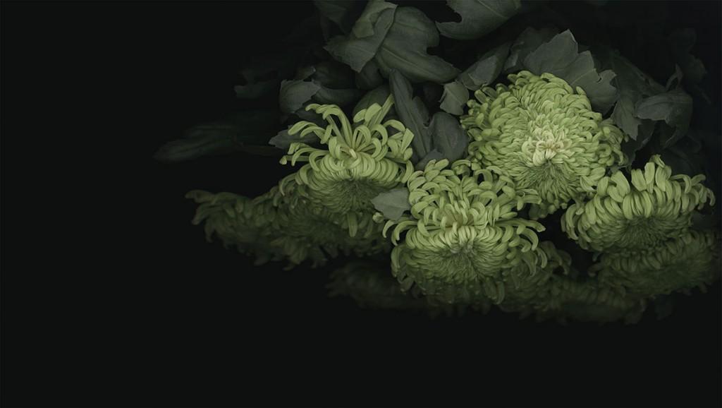 chrysanthemum_04_2013_72dpi