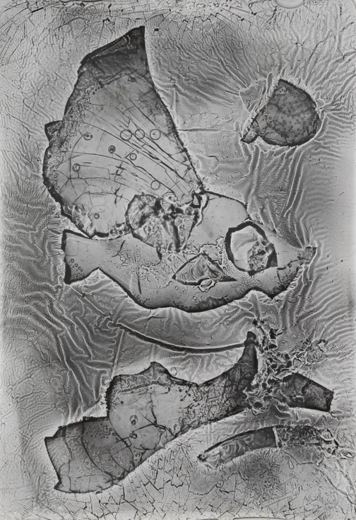 Heinz Hajek-Halke Das diluviale Aquarium 1960 Courtesy DIEHL Berlin